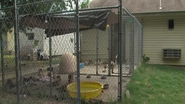 Couple plans to open animal rescues