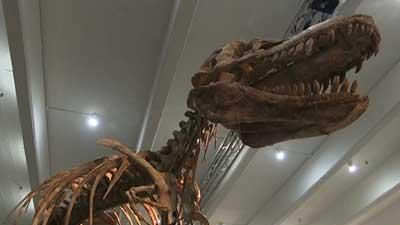 75-million-year-old dino skeleton up for auction