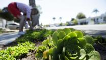 Californians curb water usage in June