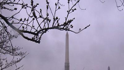 Raw: Spring Snow Covers DC Cherry Trees
