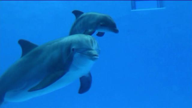 Brookfield Zoo welcomes dolphin calf