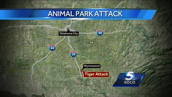 Exotic animal park responds to tiger attack 6P H