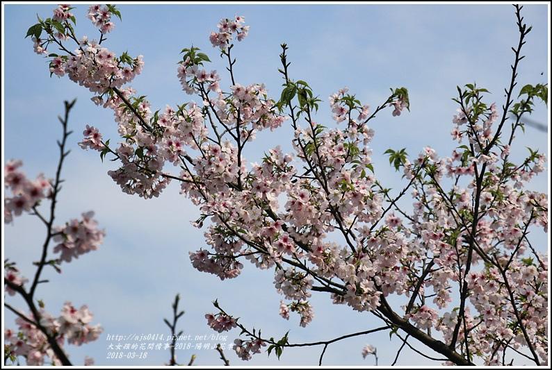 陽明山櫻花季-2018-03-88.jpg