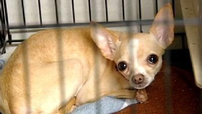Rescued Dogs Up For Adoption In Brown County