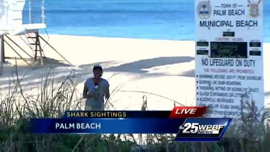 Sharks spotted on Palm Beach shoreline