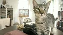 Legal battle over cats at Hemingway Museum