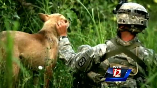 PTSD Combat Vets Gain Therapy From Rescue Dogs.