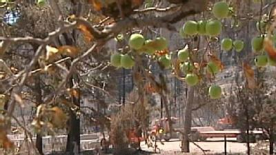 Dixon Apple Orchard Braces For Storms