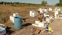 Vandals destroy bee colonies