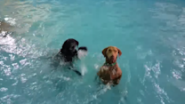 Meditative Dog Gives Swimming Lessons