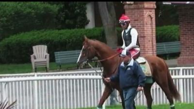 Raw:California Chrome Prepares for Historic Race