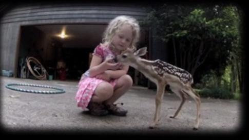 Fawn gets up close and personal with little girl