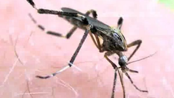 Giant mosquitoes spreading in FL