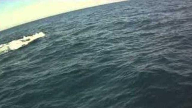 Biologists Attempt to Disentangle Whale From Fishing Rope
