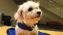 Pet of the Week: Gentle Maltese mix named Mimi