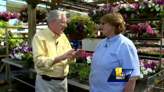 Sunday Gardeners compare pros, cons of tomato plantss