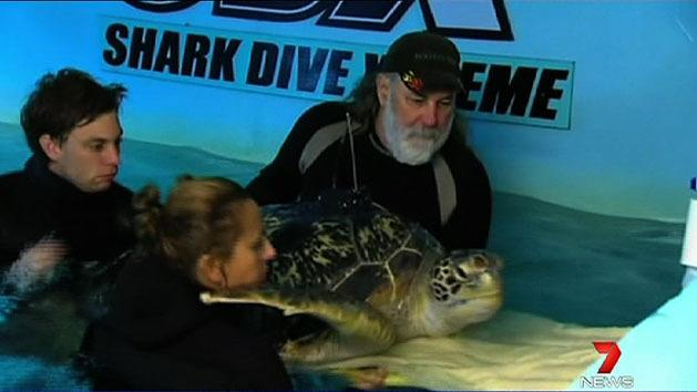 Rescued sea turtle released