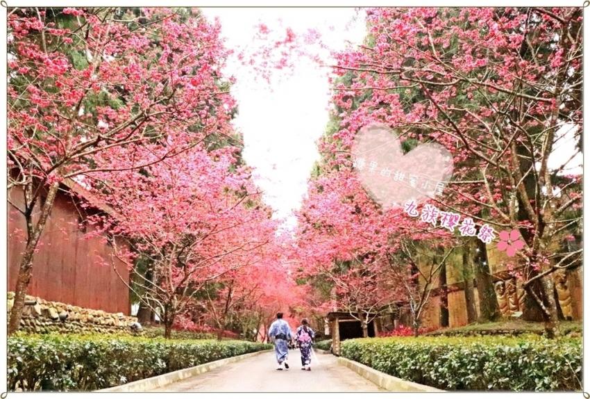 九族櫻花祭 (1).JPG