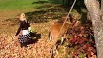 Baby deer befriends two little girls