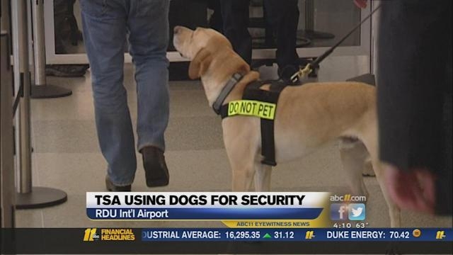 Specially trained K-9s on patrol at RDU