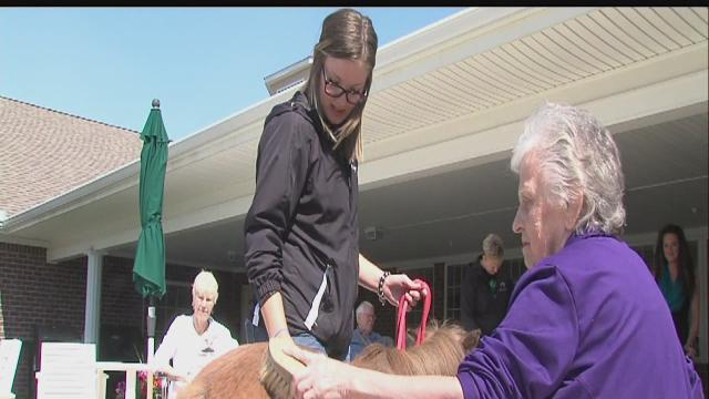 Miniature horses, big benefits for therapy patients