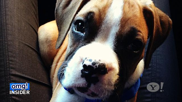 Meet the Newest Kardashian! Khloe and Lamar's New Puppy