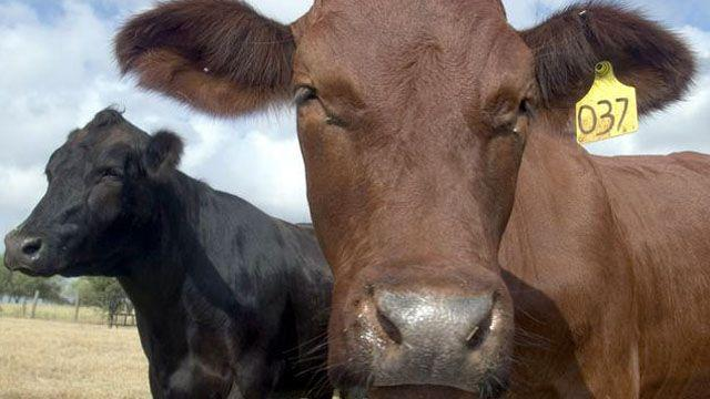 Ranchers raising cash cows in grass-fed beef