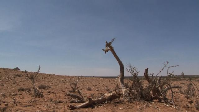 Somaliland could be a desert in 20 years