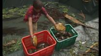 Thousands of endangered turtles rescued in Philippines