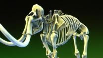 Smithsonian Makes 3D Imaging Push