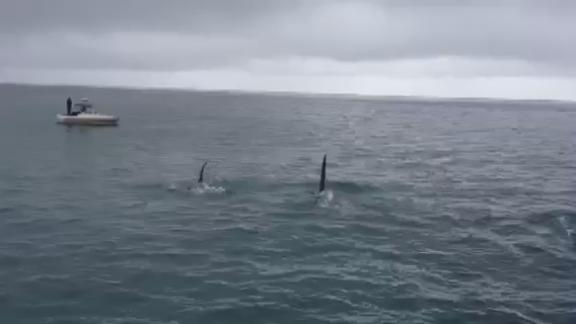 Amazing Killer Whale Footage