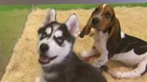 Thief steals puppies from pet store