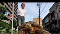 Man Walks Pet Tortoise in Japan