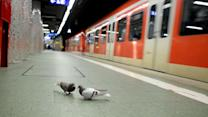 Pigeons Flock to Frankfurt Central Station
