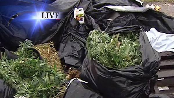 100 lbs of pot found at dumping site