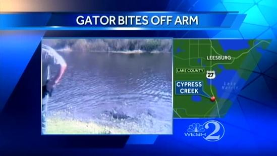 Alligator bites off woman's arm after fall into canal in Florida