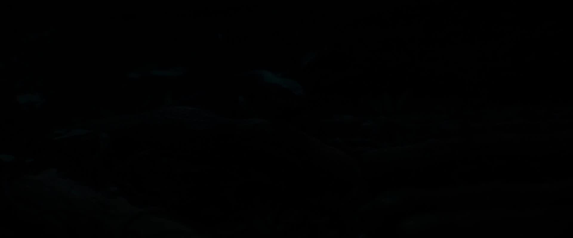 《幻險森林奇航》電影預告
