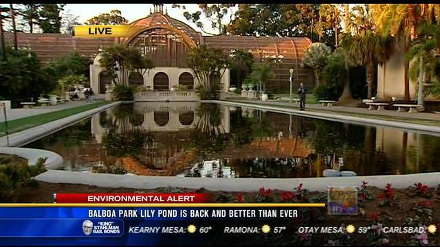 Balboa Park lily pond is back and better than ever
