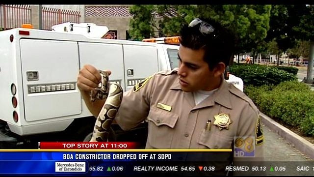 11AM UPDATE: Python dropped off at SDPD