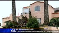 Top of palm tree snaps off, lands in yard in Loma Portal