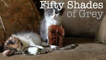 The Best Fifty Shades Parodies - From Frozen to Kittens!