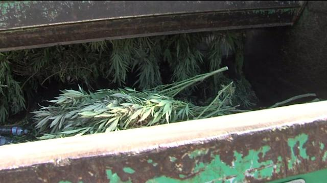 This is What a Garbage Truck Full of Pot Looks Like