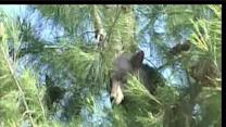 Bear spotted in tree