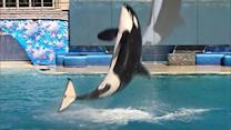 SeaWorld unveils plans for expanded killer whale pool