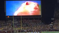 Mad Dash: Minnesota still using chipmunk to distract teams