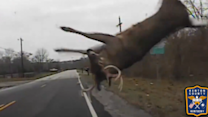Deer Flips After Collision With Police Cruiser