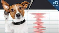 Can Animals Predict an Earthquake? - Discovery News