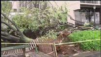 Trees topple during height of storm in Lower Manhattan