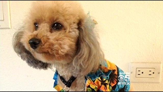 Therapy Dog Named 'Love' Stolen From Disabled Man