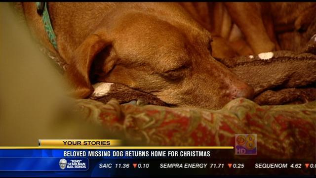 Beloved missing dog returns home for Christmas